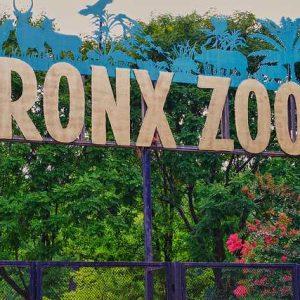 bronx_zoo-bronx-ny